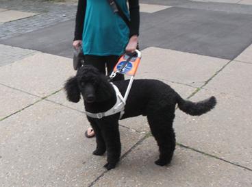 Foto: Auf dem Foto ist eine Frau mit Blindenführhund abgebildet. Dieser trägt ein Führhundegeschirr. Beide stehen auf einem Plattenweg.