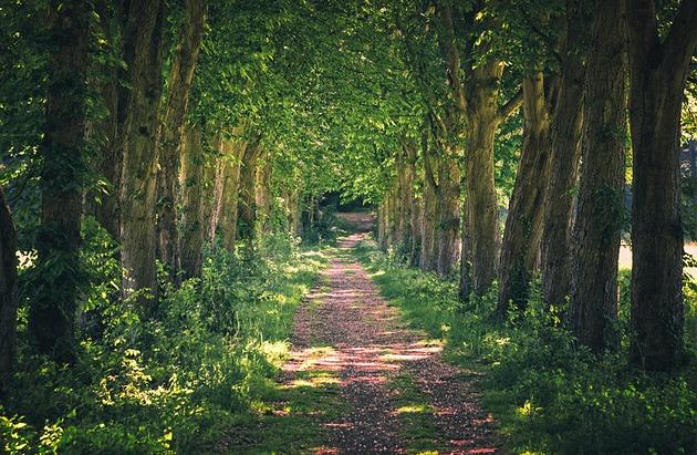 Bildbeschreibung: Bild 1 zeigt eine Allee von Bäumen, das heisst, rechts und links eines Waldweges sind Baume in vollem Grün zu sehen. Die Sonne scheint in den Wald herein und wirft teilweise Schatten auf den Weg. Ende der Bildbeschreibung.