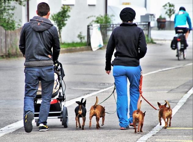 Bildbeschreibung: Bild 2 zeigt links einen Mann mit Kinderwagen und rechts neben ihm eine Frau mit je 2 kleinen Hunden an der Leine an der rechten und linken Hand. Vor ihnen im Bildhintergrund ist ein Radfahrer rechts zu sehen. Ende der Bildbeschreibung.